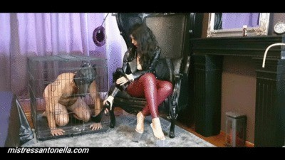 Mistress Antonella Gives Her Own Supreme Caviar To Her Dog